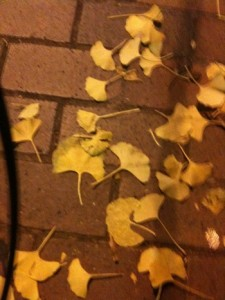 Fall Leaf in DC